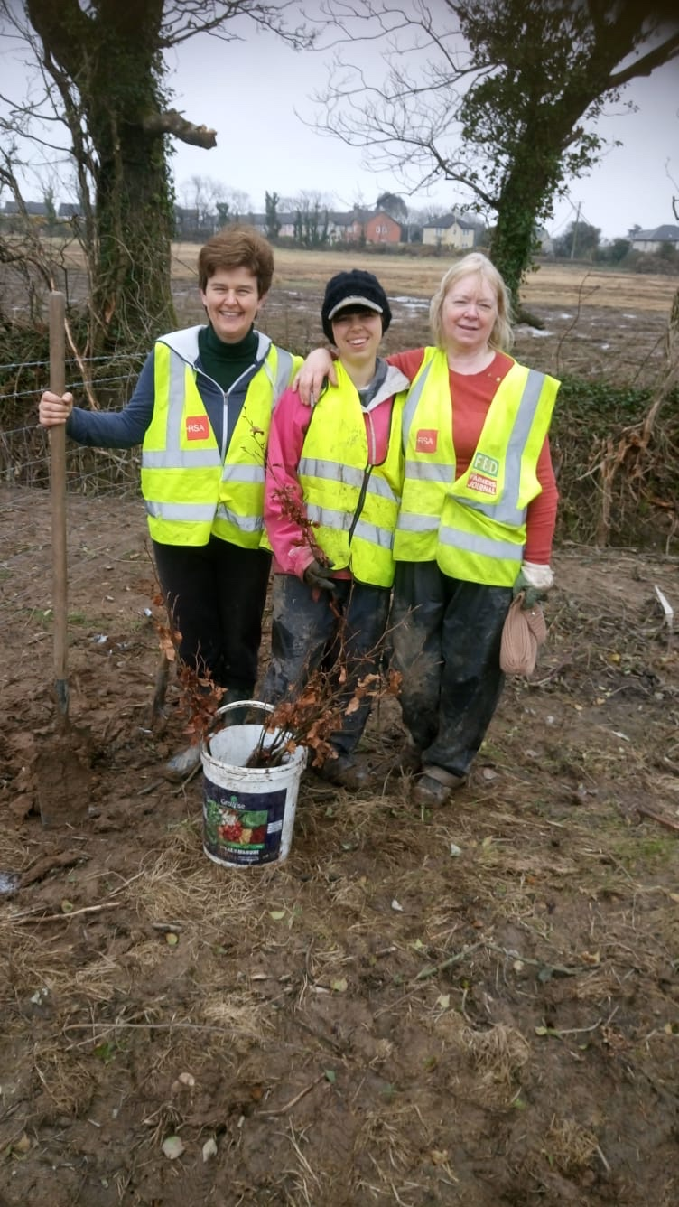 planting trees in Ireland